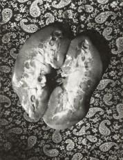 Wols Photograph. Der gerettete Blick | Martin-Gropius-Bau